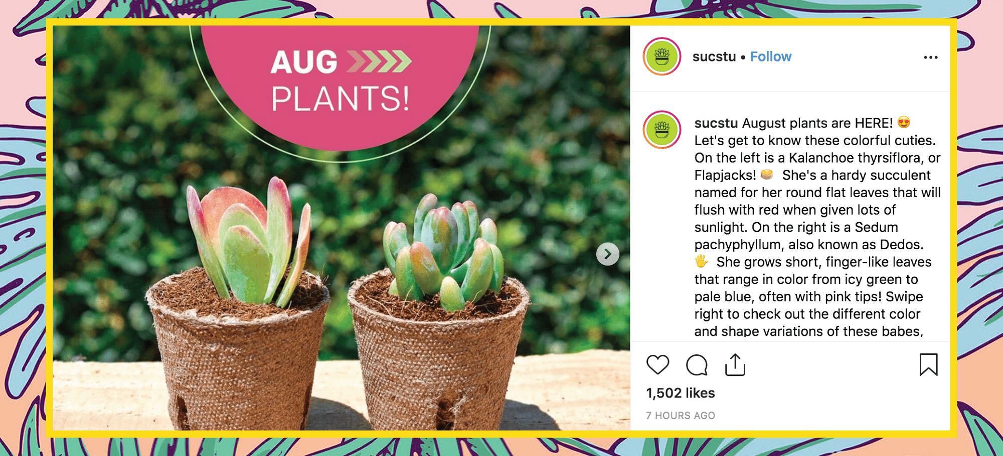 Summer Surf Blog Plants